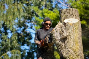 another Man sawing a tree